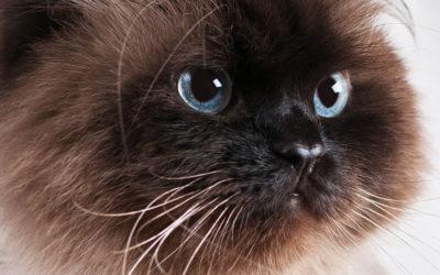 Hörbuch-Tipp: Die Katze des Dalai Lama